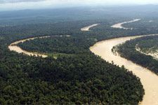 Aerial view on Kinabatangan area 2