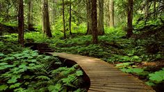 Forest -- Wallpaper
