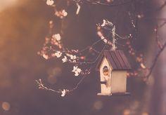 https://flic.kr/p/rgGpQ3   Bird house   Mientras media España ya está lleno de almendros rebosantes de flor, aquí, en Santander asoman tímidamente...