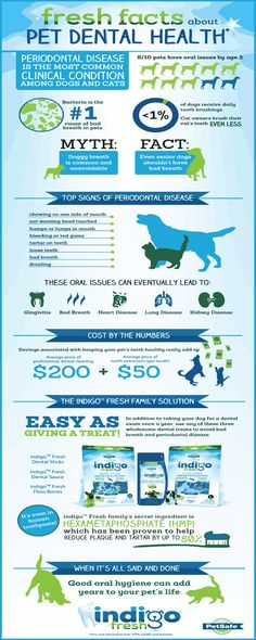 Pet Dental Health Facts from PetSafe