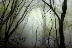 Copyright. Sanni Seppo. La isla de los espíritus.