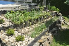 Spring in the garden: beautiful cascade vegetable beds:  #OrganicGarden #GardeningBasics