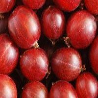 Gooseberry - Hinnomaki Red