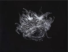 Crown jelly, jellyfish, pen and ink, black and white, stippling, jessica hsiung, science illustration