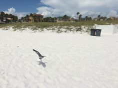 Miramar Beach, Florida Vacation, Breeze, Beaches, Crisp, Powder, Ocean, Bird, Outdoor