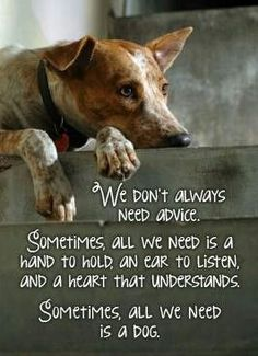 Sometimes all we need is a dog