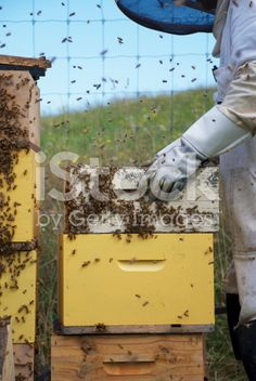 Apiarist working with Beehives royalty-free stock photo He Hive, Harvesting Honey, Agriculture Photos, Stock Imagery, Save The Bees, Bee Keeping, Image Now, Royalty Free Stock Photos, Beekeeping