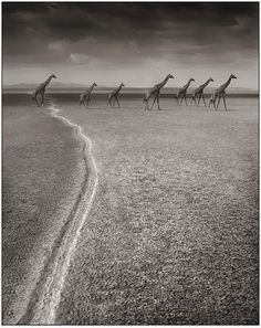 Amazing Animals Photography by Nick Brandt (my favorite photographer<3)