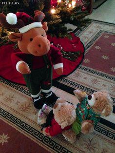 Hallo, wer bist Du denn? Hello, who are you? #Teddy #Teddybär #teddy_bear