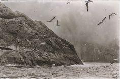 Scotland Sheep Breeds, Sea Cliff, Outer Hebrides, St Kilda, Sea Birds, Atlantic Ocean, The St, Archipelago, Black And White Photography