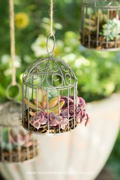 DIY Miniature Succulent Bird Cage Planter