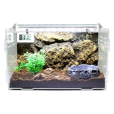 Dalle Craft Acrylic Artificial Landscape Reptile Terrarium 'Landscape of Bushes with Food Tray' for Amphibians or Larvae - http://www.bunnybits.org/dalle-craft-acrylic-artificial-landscape-reptile-terrarium-landscape-of-bushes-with-food-tray-for-amphibians-or-larvae/