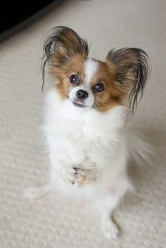 Cute Cats And Dogs, Cool Pets, Animals And Pets, Cute Animals, Baby Dogs, Pet Dogs, Dogs And Puppies, Dog Cat, Doggies