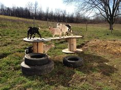 goat playground. We have lots of tires.