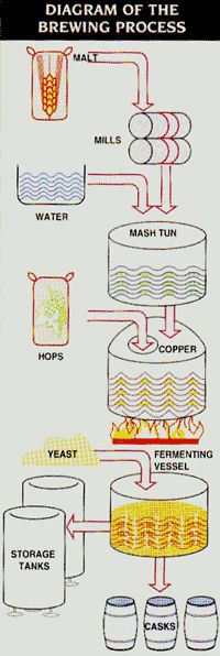 How brewing works, for those of you, like me, who never knew.