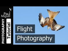 Ok, so don't actually throw away your wide angle lens. This video has been made to show that not all landscape images need to be photographed with a wide ang... Wildlife Photography Tips, Camera Photography, Photography Tutorials, Nature Photography, Photography Cheat Sheets, Uk Homes, Camera Settings, Shutter Speed, Wide Angle