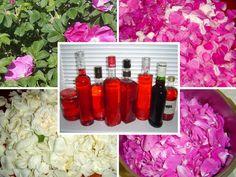 Sirup z růžových plátků, recept, zkušenosti. • Jak chutná růžový sirup? •Kčemu je růžový sirup dobrý? •Názory na kuchyňské zpracování růže. Na všech je něco. •Poznají se druhy růží po chuti? Preserves, Pickles, Liquor, Glass Vase, Fancy, Smoothie, Handmade, Decor, Syrup