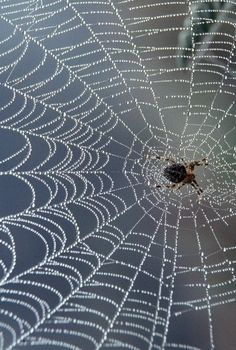 Spider Web - so intricate. Spider Silk, Spider Art, Spider Webs, Patterns In Nature, Textures Patterns, Itsy Bitsy Spider, Macro Photography, Nature Photos, Creepy