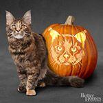 Free Pumpkin stencils from Better Homes & Gardens! Halloween Pumpkin Stencils of Cats
