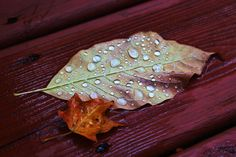 Fallen leaves on the deck