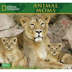 Animal Moms 2016 Wall Calendar: 9781554568697 | Baby Animals | Calendars.com