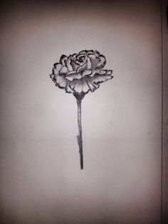 My moms favorite flower is a carnation so I decided to draw it, was kind of scared of drawing them because flowers in general are complex.