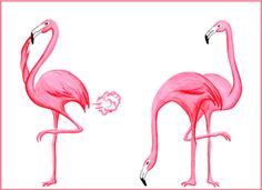 Pink flamingo farting illustration. Illustration de flamant roses qui pète par Amélie Legault