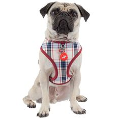 Classy Puppia Vogue Dog Harness in Beige, on an adorable Pug. Dogs Of The World, Dog Harness, Beautiful Dogs, Dog Love, Pugs, Pitbulls, Vogue, Beige, Animals