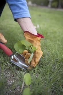 comment nettoyer les outils de jardin avant l 39 hiver jardins avant outils de jardin et. Black Bedroom Furniture Sets. Home Design Ideas