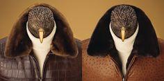 "Fall/Winter 2007-2008 ""Falcon"" Collection"