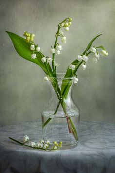 Lily of the Valley | Flickr - Photo Sharing!