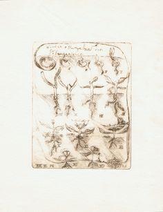 Pflanzenmetamorphose nach Goethes Urpflanze, die mit anschauender Urteilskraft innerlich geschaut wird im Menschen. 1976 Radierung von Robin Eaton und gedruckt. Some Words, Mystic, Robin, Vintage World Maps, Art Pieces, Things To Sell, My Style, People, Printing