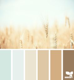 wheat tones -- One of the blue/greens for the walls...neutrals for stability...splashes of other colors for pop