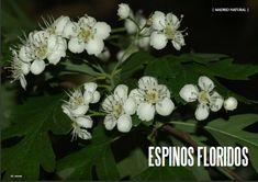 Es Madrid no Madriz Magazine, Nº 65 Abril 2018 Fauna, Madrid, Magazine, Natural, Plants, Magazines, Plant, Planting, Planets