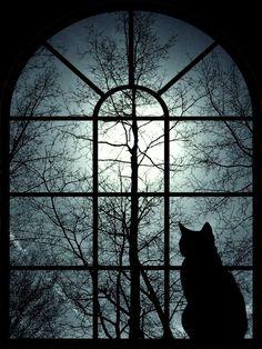 TRANSGRESSÃO  Dentro da noite Enquanto o silêncio dorme Olhos arregalados percebem O Barulho de gatos no cio Os latidos de cães solitários.  Um fluxo de energia Desperta o sono Uma lâmpada acesa Recusa o escuro Transgressão da mente.  Não há sentimentos Não há cansaço Não há o que houver Só estagnação de um corpo; Escravo de noites insones.  www.rosejd.blogspot.com.br