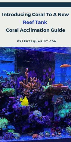 147 saltwater aquarium set up ideas