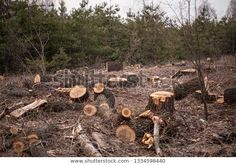 deforestation - Google Search Green Day, Texture, Wood, Crafts, Google Search, Surface Finish, Manualidades, Woodwind Instrument, Timber Wood