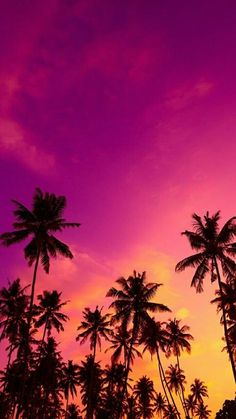 Shared by QUEEN. Find images and videos about wallpaper, pink and palm trees on We Heart It - the app to get lost in what you love. Summer Wallpaper, Beach Wallpaper, Tree Wallpaper, Iphone Background Wallpaper, Beautiful Nature Wallpaper, Beautiful Landscapes, Natur Wallpaper, Sky Aesthetic, Sunset Pictures