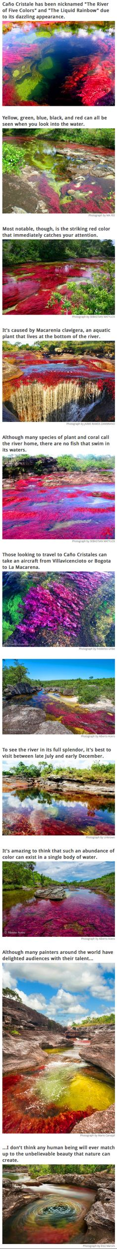 Caño Cristale is a river in Meta, Colombia in the province of Serrania de la Macarena. But this is no ordinary river. The colors that can be seen here have caused the river to be deemed by many as the most beautiful in the world... and when you see the pictures, you might be inclined to agree.