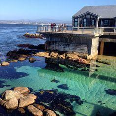 Monterey Bay Aquarium! One of my favorite places,ever!