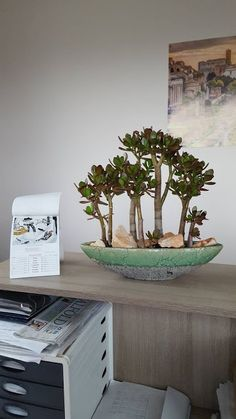 Precious Tips for Outdoor Gardens - Modern Jade Bonsai, Wisteria Bonsai, Bonsai Plants, Bonsai Garden, Jade Succulent, Cacti And Succulents, Small Gardens, Outdoor Gardens, Suculentas Interior