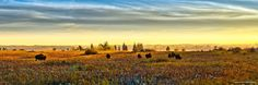 Photo by Frazer Studio of Photography. Arctic Tundra, Clear Lake, Camping And Hiking, Bison, Rafting, Canoe, Fields, Photo Galleries, Wildlife