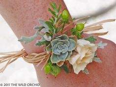 Wrist corsage @ Healdsburg Gardens  Succulent, ivory spray rose, hypericum berry, rosemary and dusty miller. Flowers and photo by The Wild Orchid floral design in Sebastopol.