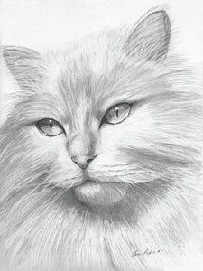 Himalayan Cat Print by Lena Auxier