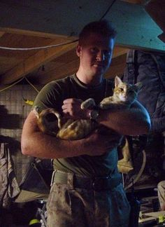 Soldiers & kittys