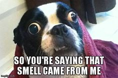 So You're Saying that Smell Came from Me? (Photo) - http://www.bterrier.com/so-youre-saying-that-smell-came-from-me-photo/ https://www.facebook.com/bterrierdogs