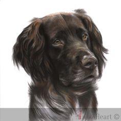 dog portrait pastel faxe