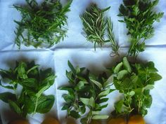 Des herbes, des fleurs et des découvertes...: Des aromatiques