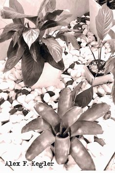Alex photograph project: leaves...