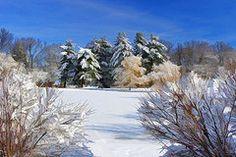 Featured Art - Winter Wonderland by Allen Beatty